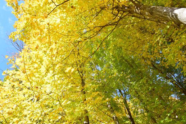 autumnleavesofillumination
